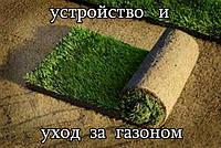 Устройство газона (посевной, рулонный). Уход за газоном