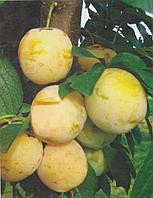 Саженцы сливы Желтая Афаска (Болгария)