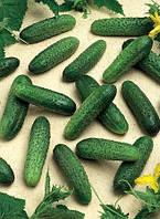 Семена огурца Мирабелл F1 (250 семян) Семинис