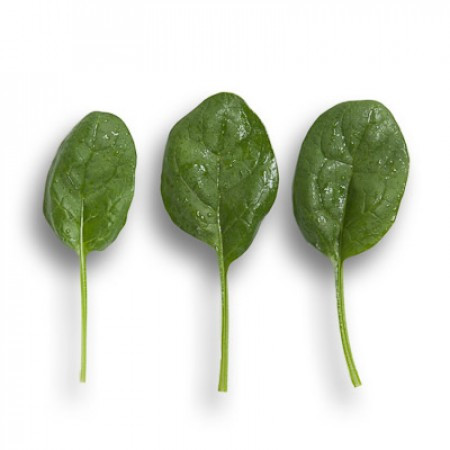 Семена шпината Вудпекер F1 \ Woodpecker F1 1.000.000 семян Rijk zwaan