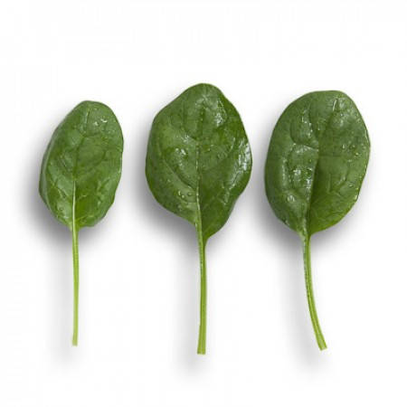 Семена шпината Вудпекер F1 \ Woodpecker F1 25000 семян Rijk zwaan