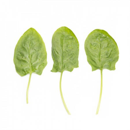 Семена шпината Гну F1 \ Gnu F1 25000 семян Rijk zwaan
