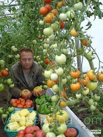Ноу Хау для огородников