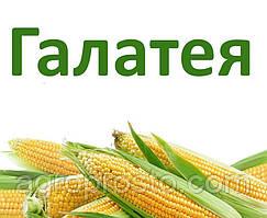 Гибрид кукурузы ДН Галатея (ФАО 260)