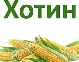Гибрид кукурузы ДБ Хотин (ФАО 280)
