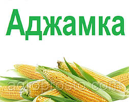 Гибрид кукурузы ДН Аджамка (ФАО 310)