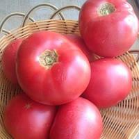 Мей Шуай F1 500 шт. семена томата розового высокорослого Seminis Голландия