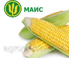 Семена кукурузы Моника МАИС (ФАО 350)