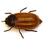 Майский жук 33мм, фото 2
