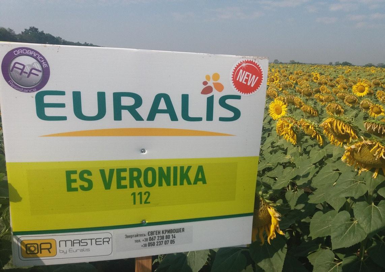 Семена подсолнечника ЕС Вероника OR7
