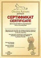 Грамоты, дипломы, сертификаты (печать, разработка дизайна)