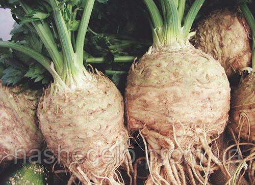 Семена корневого сельдерея Неон 1000 драже Semo