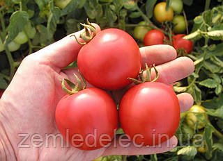 Семена томата Даринка F1 20 гр. Semo