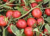 Семена томата Тритонекс 300 гр. Semo