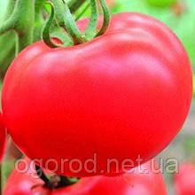 Белфорт F1 500 шт семена томата высокорослого Enza Zaden Голландия