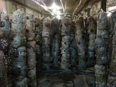 Какие требования к теплице для разведения грибов