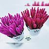 Расчески для бровей и ресниц (цвета в ассортименте) для наращивания и Ламинирования ресниц