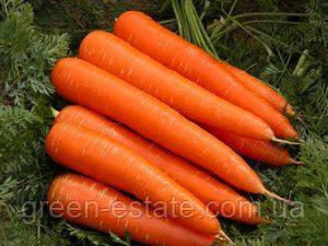 Морква московська пізня (вагова)