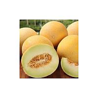 Семена дыни Лада (весовые от производителя)