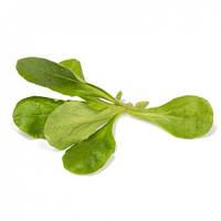 Салат Корн Диона (Dione RZ), зеленый, 100 000 семян