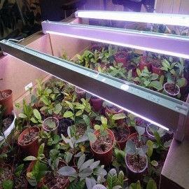 Світильник балка 18 Вт + лампа для рослин і акваріумів Osram Fluora 18 Вт