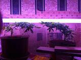 Світильник 2*36 Вт + лампи для рослин і акваріумів Osram Fluora 2*36 Вт фитолампа, фото 2