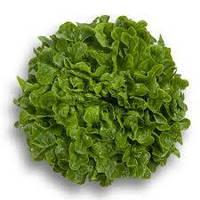 Салат дуболистный Гумбольдт (Гумбольдт RZ) зеленый, 5000 семян, дражже