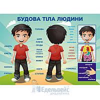 Плакат «Будова тіла людини» А1