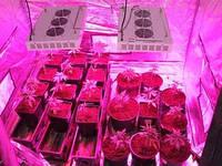 Фитопанель 400 Вт. для выращивания растений (для гроубокса и теплиц, Growbox)