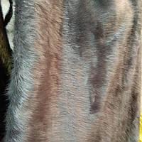 Мех искусственный для пошива верхней одежды