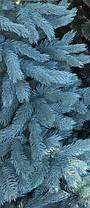 Ель элитная голубая литая 210 см, фото 3