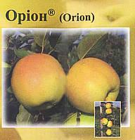Саженцы яблони Орион ( Чехия )