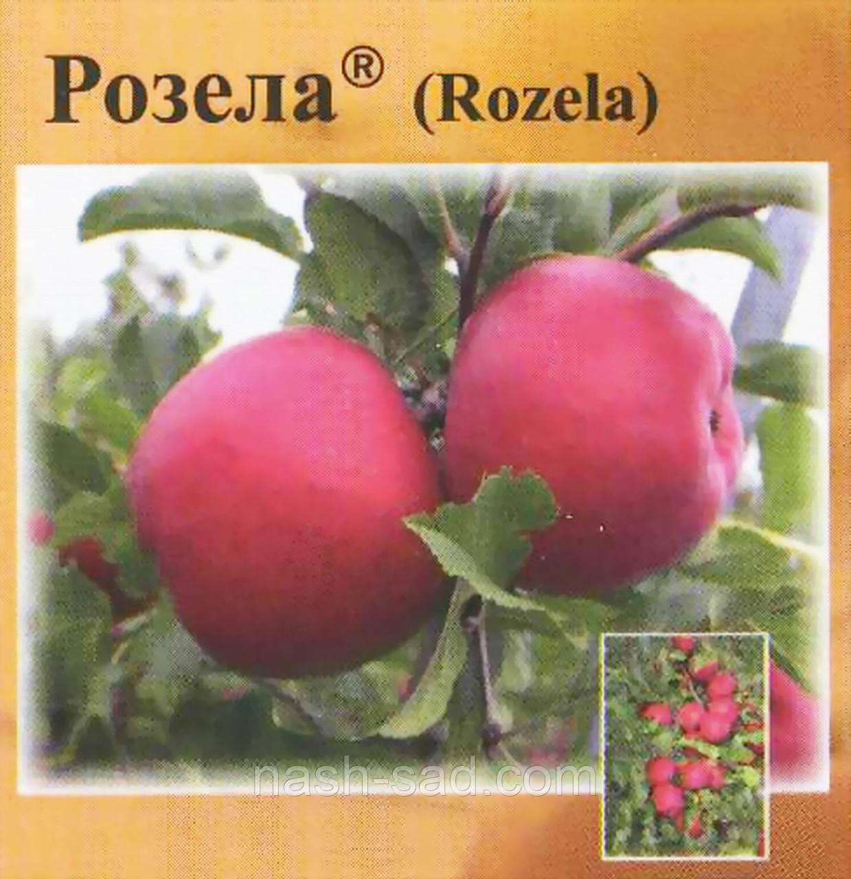 Саженцы яблони Розела