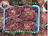 Салат КАРМИНОВА / KARMINOVA,  ТМ SEMO (Чехия) проф. пакет 1000 семян, фото 3