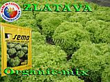 Салат ЗЛАТАВА / ZLATAVA  ТМ SEMO (Чехия) проф. пакет 1000 семян, фото 2
