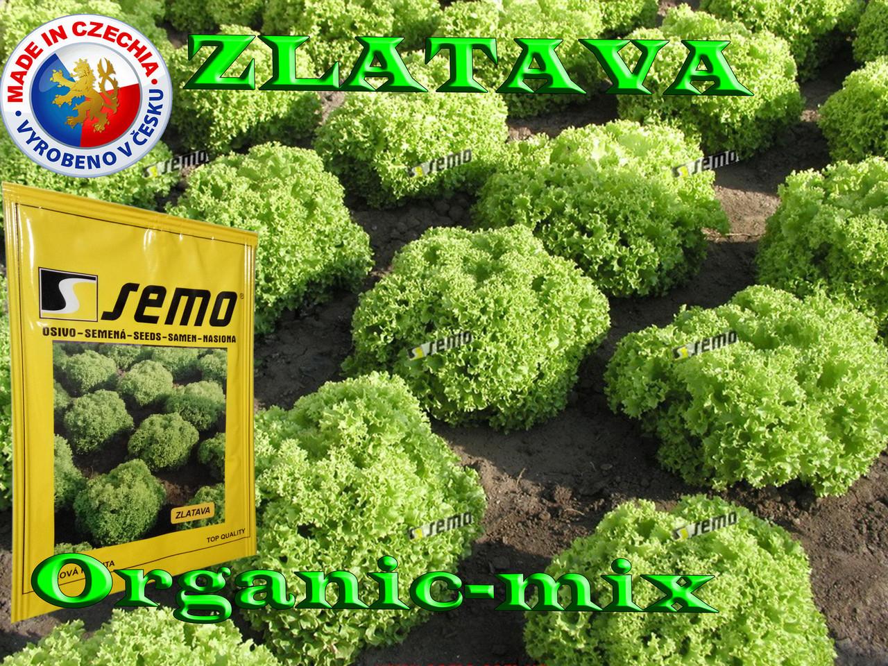 Салат ЗЛАТАВА / ZLATAVA  ТМ SEMO (Чехия) проф. пакет 5000 семян