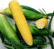 Семена сахарной кукурузы Ноа F1 \ Noa F1 5000 семян Hazera