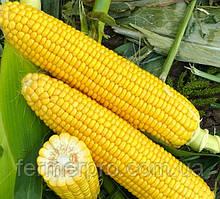 Семена сахарной кукурузы Харди F1  \ Hardi F1 100.000 семян Hazera