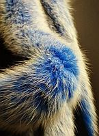 Меховая опушка из песца меланж голубой 60 см