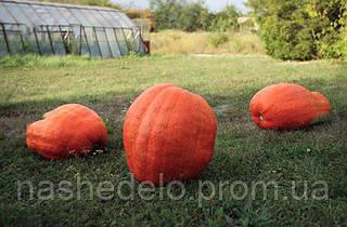 Семена тыквы Голиаш 500 гр. Semo