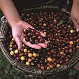 Італійська кава мелена Lavazza Tierra Peru Ande, 180 р., фото 6