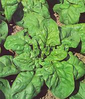 Семена шпината Матадор 100 гр. Semo
