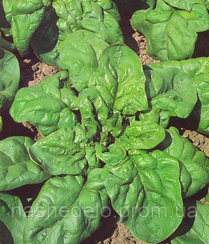 Семена шпината Матадор 1 кг. Semo