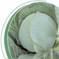 Семена капусты Гилсон F1(2500c) средне-поздняя