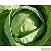Семена капусты Бронко F1 (2500c) средняя