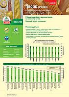 Насіння кукурудзи П8000 ФАО 230