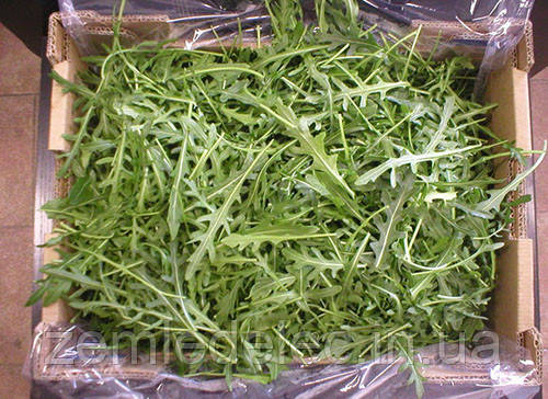 Семена рукколы Вайлд Рокет 50 гр. Semo