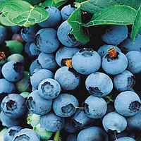Антоцианы натуральный голубой пищевой краситель