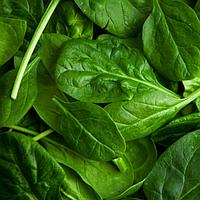 Хлорофиллин натуральный зеленый пищевой краситель