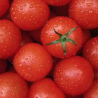 Ликопины натуральный красный пищевой краситель